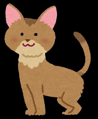 http://hozawa.jp/news/news_img/cat_abyssinian.png